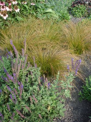 Carex 39 prairie fire 39 from rush creek growers for Mounding grass