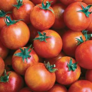 Tomato 'Isis Candy Cherry'