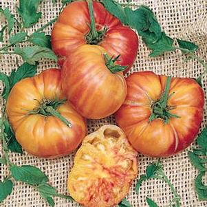 Tomato 'Mr. Stripey'