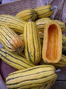 Winter Squash 'Bush Delicata'