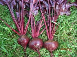 Beets 'Bull's Blood'