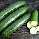 Cucumber Middle Eastern 'Green Finger'