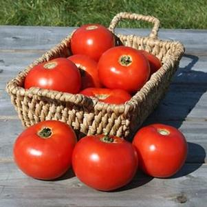 Tomato 'Mountain Fresh Plus'