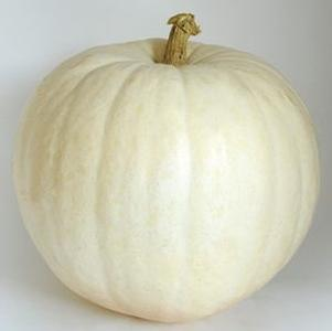 Pumpkin 'Polar Bear'