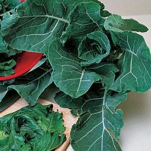 Collards 'Georgia'