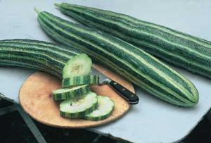 Cucumber 'Painted Serpent'
