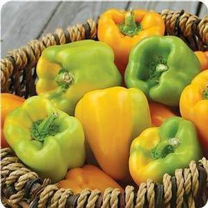 Pepper 'Flavorburst Gold sub Sweet Sunrise'