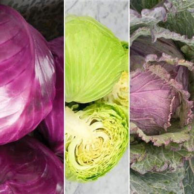 Cabbage 'Deluxe Mix'