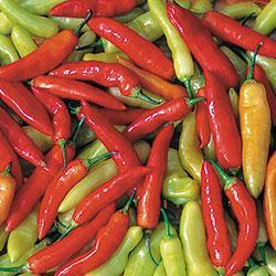 Pepper 'Aji Cristal'