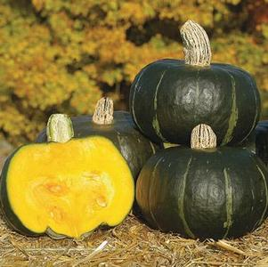 Winter squash, Buttercup 'Bonbon'