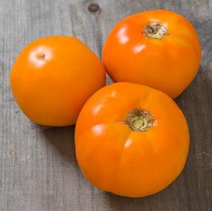 Tomato 'Chef's Choice Orange'
