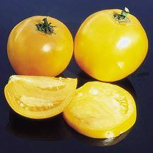 Tomato 'Lillian's Yellow'