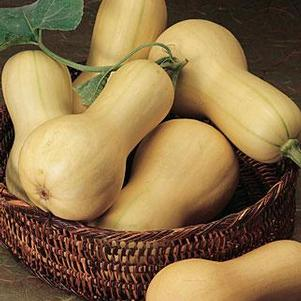 Winter Squash 'Burpee's Butterbush - N/A'