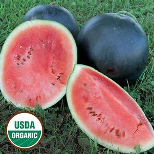 Watermelon 'Blacktail Mountain'
