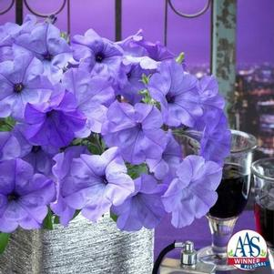 Petunia 'Evening Scentsation F1'