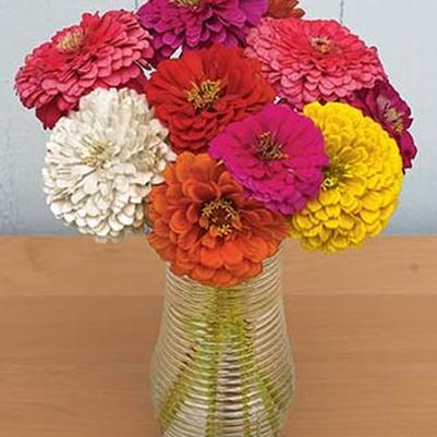 Zinnia 'State Fair Mix'