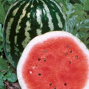 Watermelon 'Crimson Sweet'