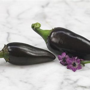 Pepper 'Black Hungarian'