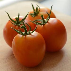 Tomato 'Heirloom Marriage Perfect Flame'