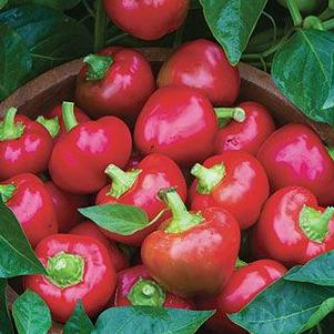 Pepper 'Cherry Stuffer'