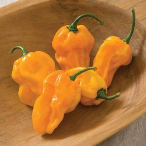 Pepper 'Numex Suave Orange'