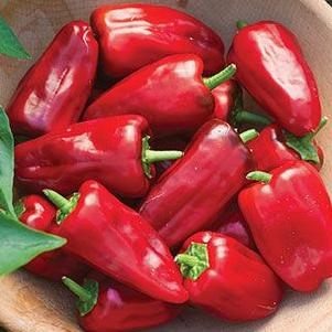 Pepper 'Sweet Heat'